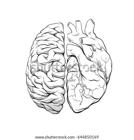 versus letters human brain