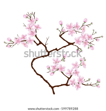 vertical  branch of cherry