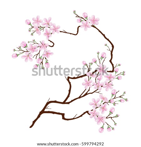 vertical curved branch of