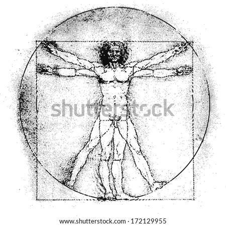 vetruvian man  human anatomy