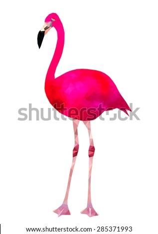 vibrant pink flamingo bird low