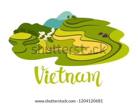 vietnamese rice field vector