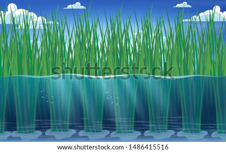 view of rice plants under water