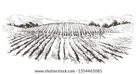 vine plantation hills landscape