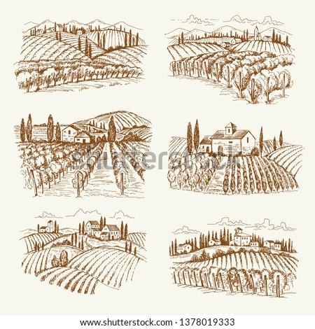 vineyard landscape france or