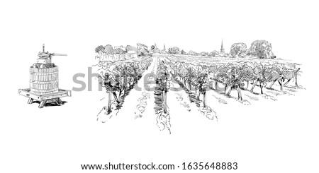 vineyard landscape france