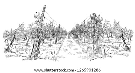 Vineyard landscape hand drawn horizontal sketch vector illustration isolated on white