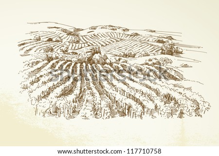 vineyard landscape    hand