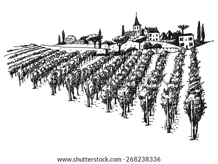 vineyard landscape ink pen
