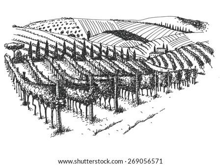 vineyard landscape ink pen