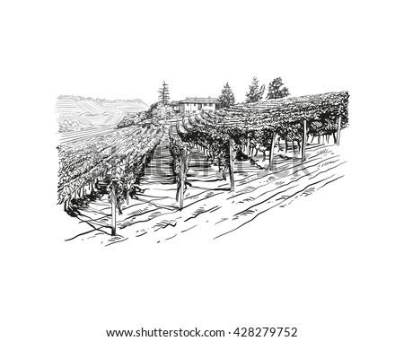 vineyard landscape vector