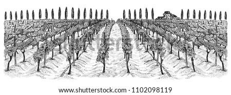 vineyard landscape with