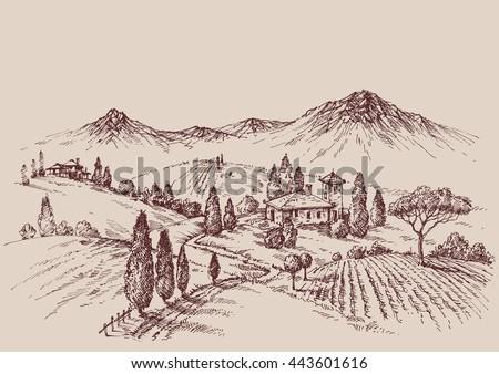 vineyard sketch. wine label...