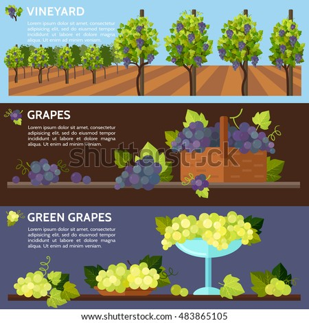 vineyard tabletop design rows