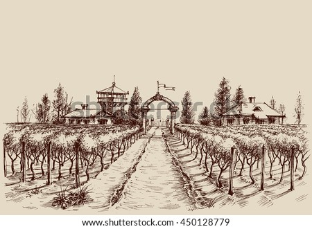 vineyard vector drawing  etch
