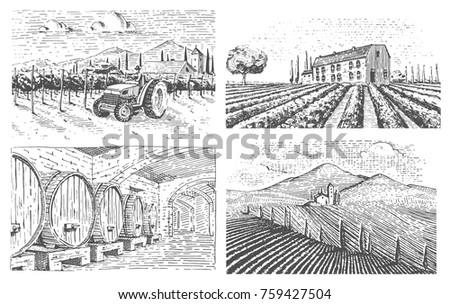 vineyards landscape  tuscany