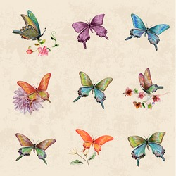 vintage a collection of butterflies. watercolor painting