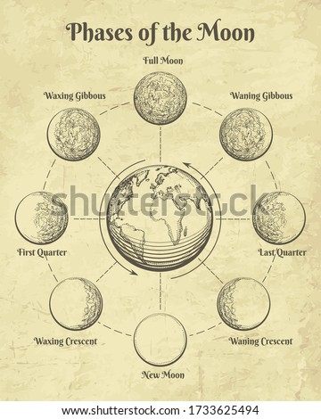 Vintage astrology moon. Moons phases in space retro illustration, half full and new moon dial hand drawn clipart, different celestial orbit lunar engraving astrological paganism vector signs