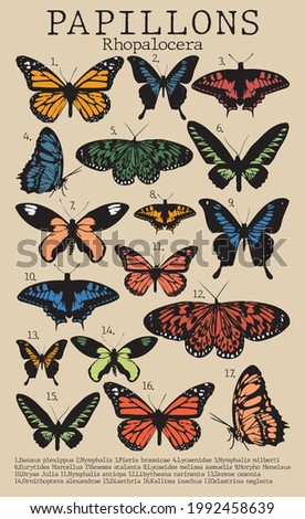 Vintage butterfly illustration print with latin names of butterflies for woman - girl tee t shirt or poster - Vector