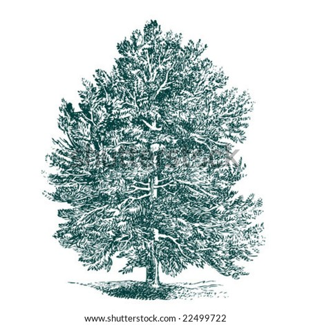 vintage detailed vector tree.