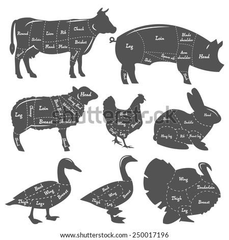 Vintage diagram meal cutting