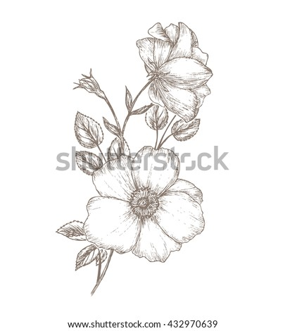Vintage dog rose sketch. Flower background.  Hand drawn card vector illustration. Wild  #432970639