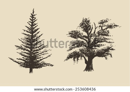 Vintage engraved style hand drawn set of trees, vector illustration, sketch