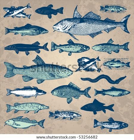 vintage fish set, vector - stock vector