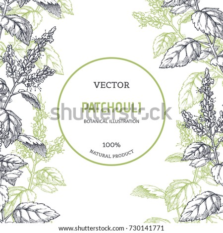 Vintage floral background with plants. Vector botanical illustration with patchouli branches. Herbal texture. Component for aromatherapy