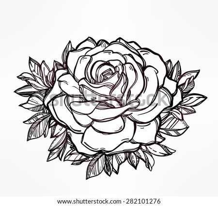 Roses And Line Background Download Free Vector Art Stock