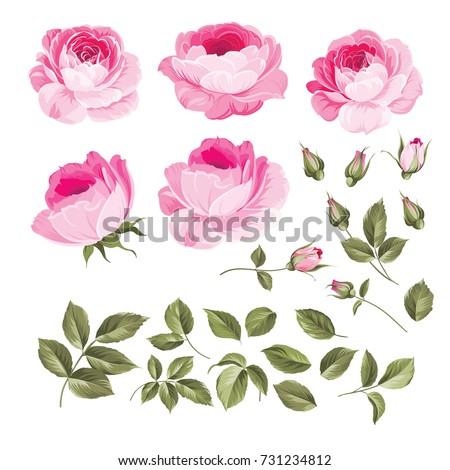 vintage flowers set overwhite