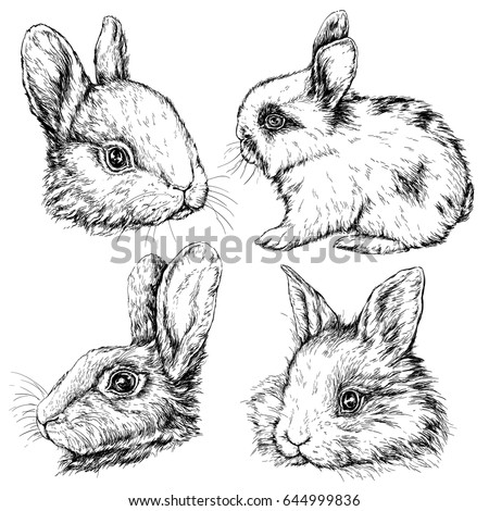 Vintage graphic Rabbit Print. Hand drawing vector illustration isolated on white background. Vintage engraving style.