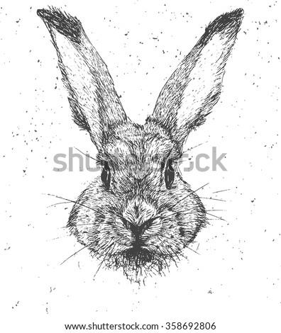 vintage graphic rabbit vector