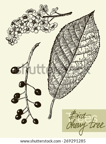 vintage graphic vector leaves