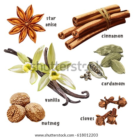 Vintage hand drawn set with dessert spices. Vector illustration isolated on white. Star anise, nutmeg, cinnamon, cardamom, vanilla, cloves