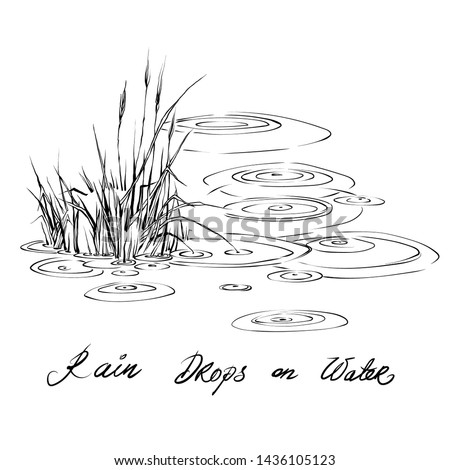 Vintage hand drawn sketch style circles on the water. Vector Ink drawing rain splash drops  on the river and grass Abstract rainy weather on water surface. Drip liquid. Grass hill in the riwer swamp.