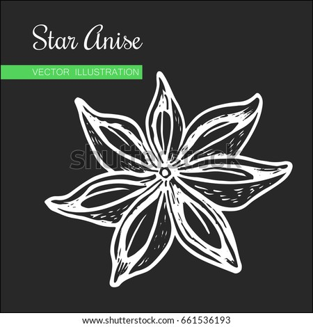 Vintage hand drawn Star Anise Vector illustration isolated on white  background. Dried Star Aniseed or lllicium Verum, Used for Seasoning in Cooking. Star anise dessert  spice fruit and seeds.