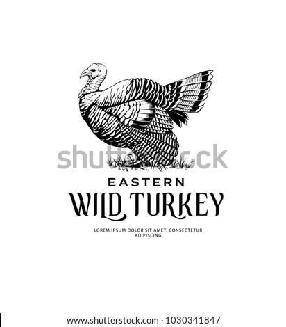 Vintage Illustration of Eastern Wild Turkey