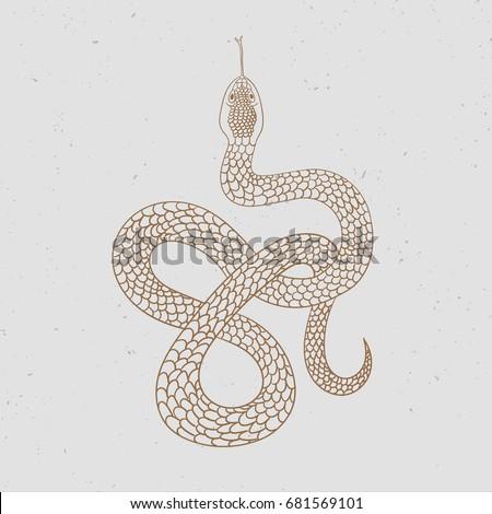 vintage line snake vector