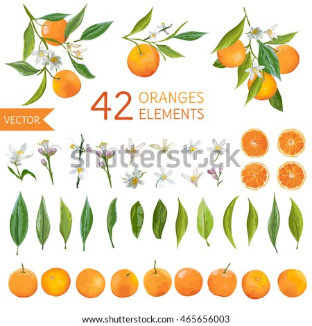 Vintage Oranges, Flowers and Leaves. Lemon Bouquets. Watercolor Style Fruit Background. Vector.