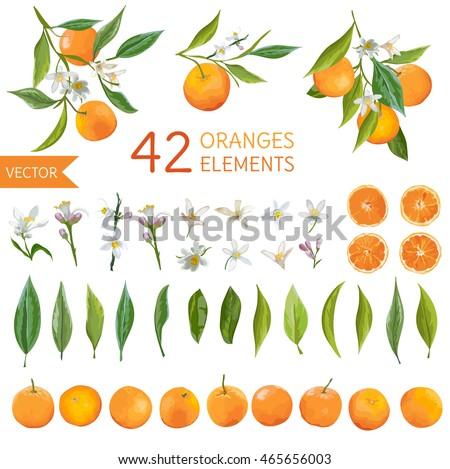 Vintage Oranges, Flowers and Leaves. Lemon Bouquets. Watercolor Style Fruit Background. Vector.