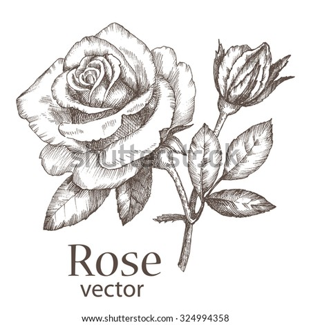 royalty free rose flowers drawing vector 541091452 stock photo