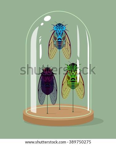 Vintage taxidermy cicadas collection in bell jar. Vector illustration.