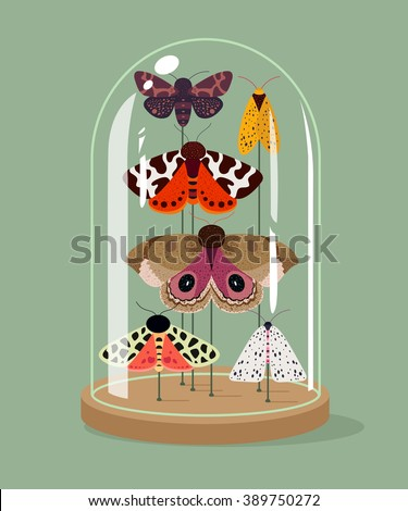 Vintage taxidermy moths collection in bell jar. Vector illustration. Insects protection concept.