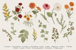 Vintage vector botanical illustration. Set. Autumn flowers and twigs. Colorful