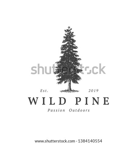 Vintage wild pine design logo vector, Evergreen logo design inspiration - vector