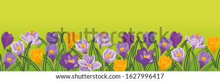 violet  lilac and yellow