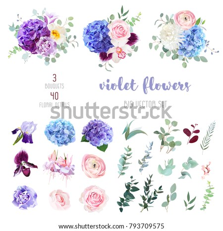 Violet, purple and blue hydrangea, pink rose and ranunculus, white chrysanthemum, carnation, plum orchid, iris, fuchsia, bell flowers, eucalyptus, and mix of greenery big vector collection.