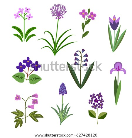 violet vector flowers