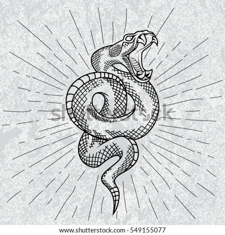 viper snake hand drawn